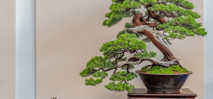 Hwa Fong – Conifers – part 4