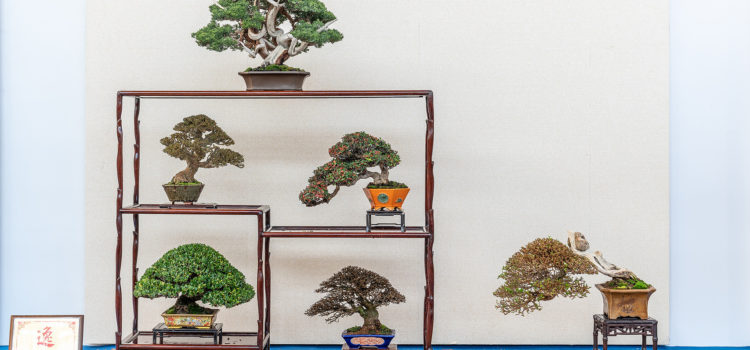 Hwa Fong – Shohin bonsai stands – part 2